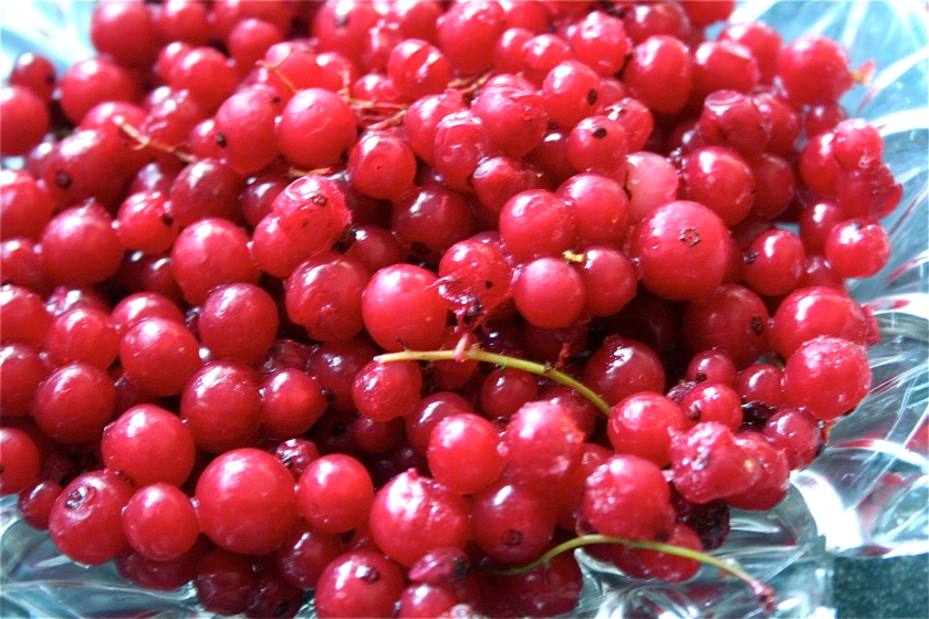 red currant pie