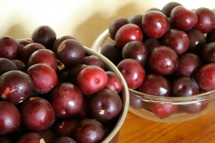 plum preserves 1